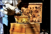 Taste the natural honey pleasure at Castle of Messerdiere