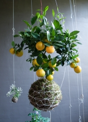 String gardens by Fedor van del Valk