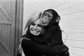 Brigitte Bardot stops her cinema